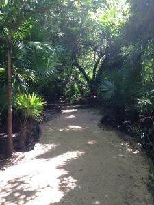 Sacbeoob, the mayan roads in the Yucatan Peninsula