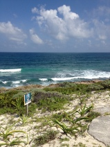 A natural paradise for birdwatchers and explorers. So close to Cancún and Riviera Maya.